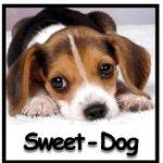 sweet-dog-165x163